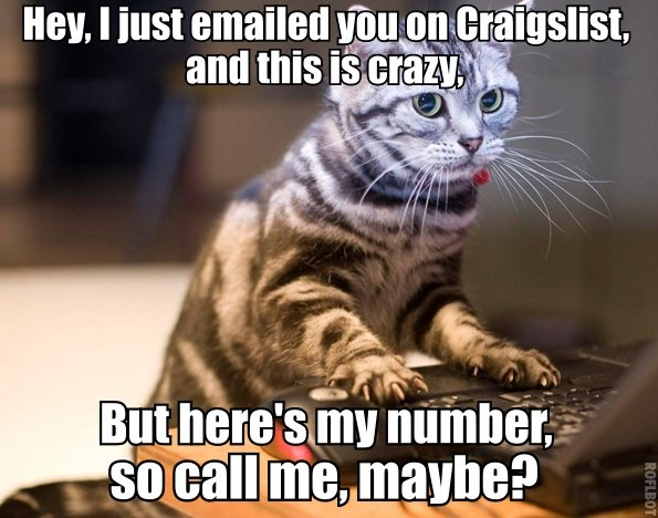 craigslist cat